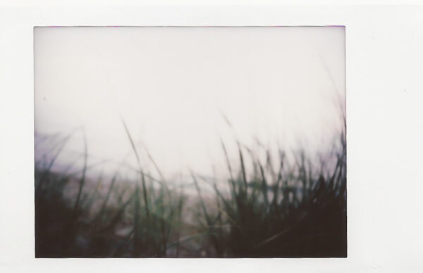 analog lite oskarpt foto föreställande gräs vid en strand
